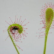 willkommen auf meiner homepage orchideen. Black Bedroom Furniture Sets. Home Design Ideas